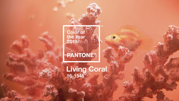 "Living With Pantone's ""Living Coral"""